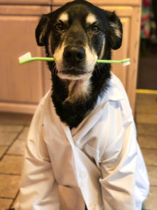 Linwood Pet Hospital Dental Health Month