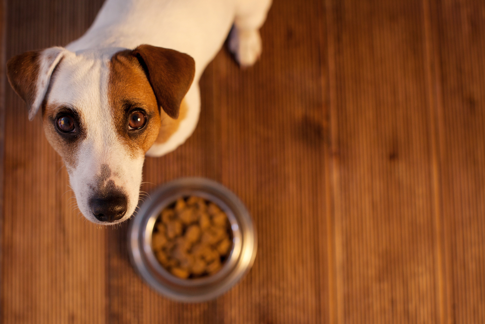 Grain-Free Diets: What Every Pet Owner Should Know