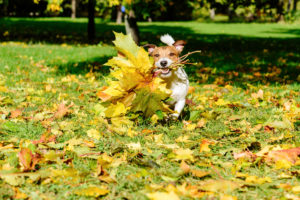 fall pet allergies