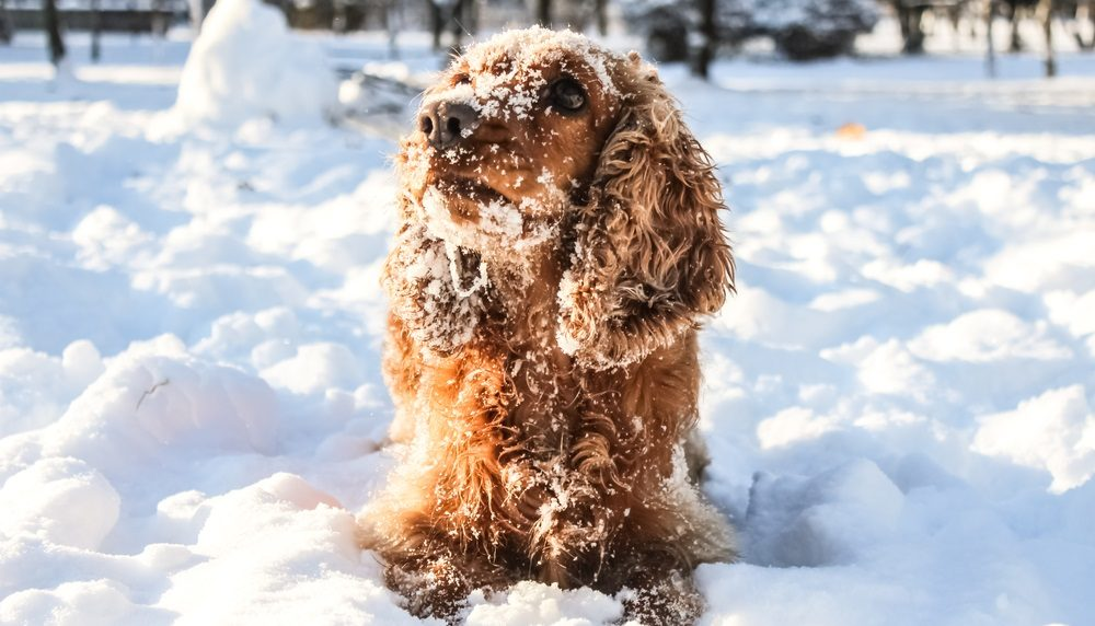 Cold Weather and Arthritis: Keeping Your Pet Comfortable
